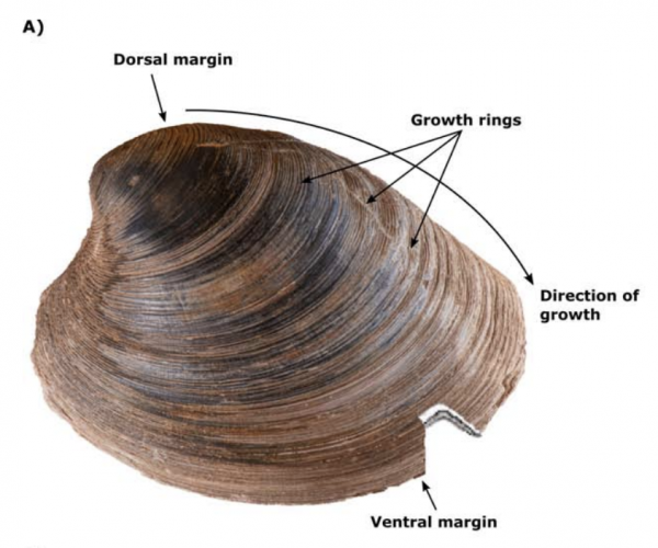 Paper Explores Use of Shell Material to Gather DNA From Mollusks